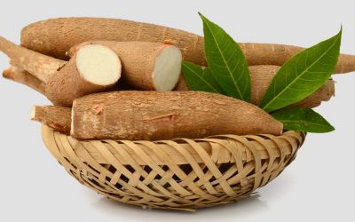 cassava-root-in-basket-large
